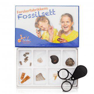 fossilsett